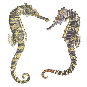 DM 22 - Tiger Tail Seahorses