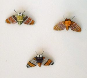 Kate packer amber moths