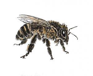 DM 27 - Honey Bee